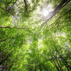 Light on trees in a forest